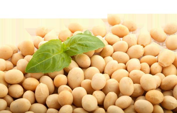 Млякото и соята са протеини, които са изцяло пълноценни