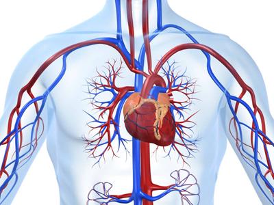 kardiolog-dobrich