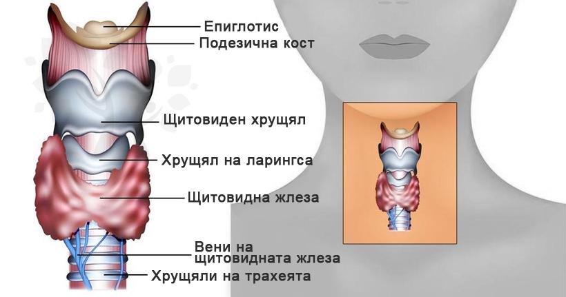 Проблем със щитовидната жлеза - специалисти