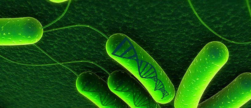 Бактерията - любопитни факти